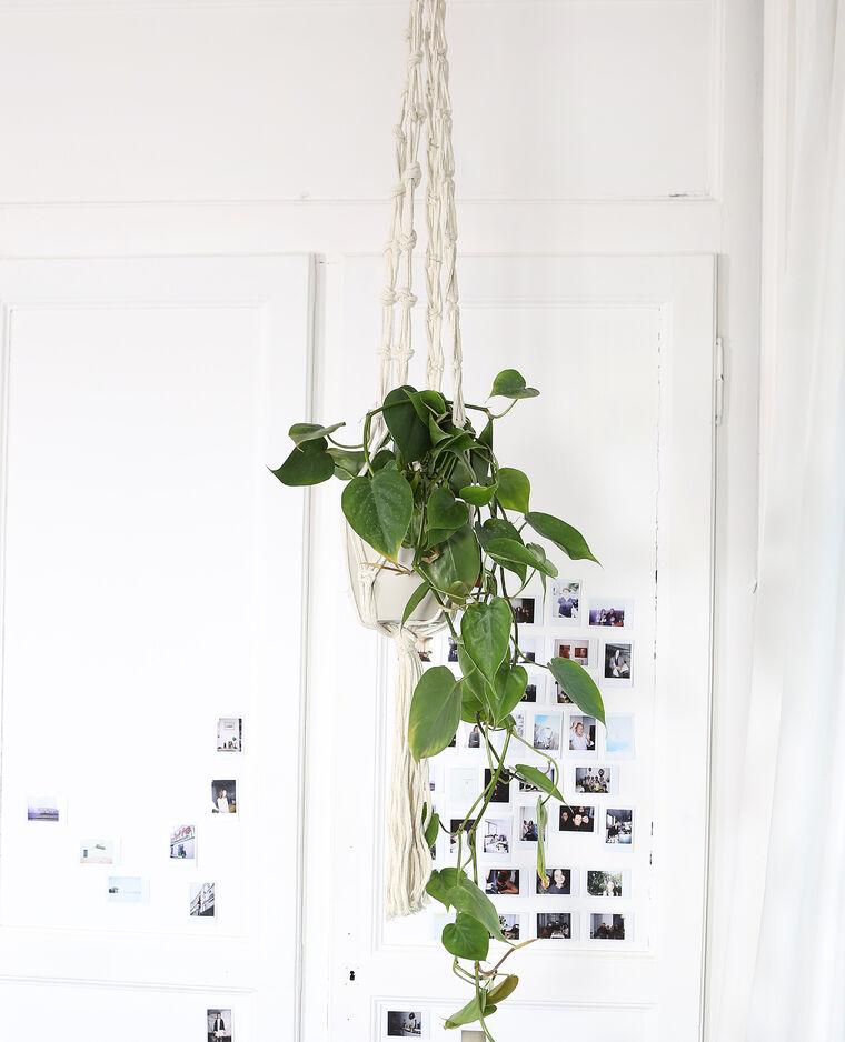 Porte-plante macramé Beige